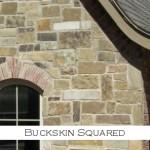 buckskin squared